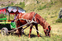 Horse harnessed to a tent with a coachman grazing on the lawn. Royalty Free Stock Photos