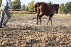 Horse harrow Stock Photos