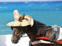 Horse with hat Royalty Free Stock Image