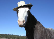 Horse with Hat. Horse wearing a straw hat Royalty Free Stock Photography