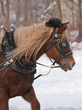 Horse with hat pulling sleigh Royalty Free Stock Photo