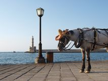 Horse in hat on sea quay with lighthouse Stock Photos