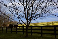 Horse Haven Stock Photography