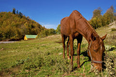 Horse having lunch Stock Image