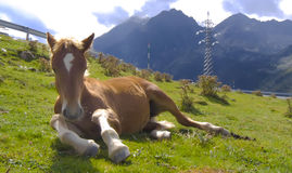 Horse having a rest at the Pyrenees Stock Photos