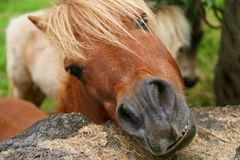 A Hungry Horse stock image