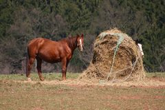 Horse and hay Stock Photography