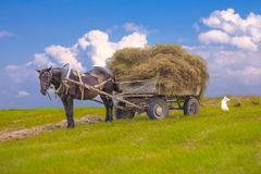 Horse and hay wagon in a field on a background of Stock Photo