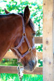 Horse Head. Photo of a horse's head in a  stable Royalty Free Stock Images