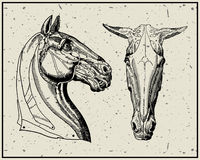 Horse head. Isolated on light background. Additional vector format Illustrator 8 eps Royalty Free Stock Photo