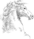 Horse head Royalty Free Stock Image