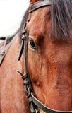 Horse head. Taking a photo at a close range royalty free stock photography