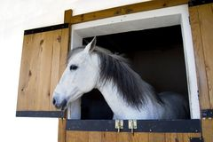 Horse head. Poking out a stable door Stock Photo