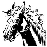 Horse Head Royalty Free Stock Photography