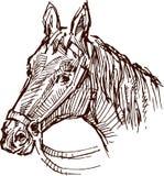 Horse head vector illustration