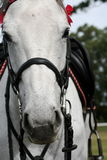 Horse head. A close up of a white horse head Royalty Free Stock Images