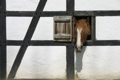 Horse head. Horse looks from a window stock photo