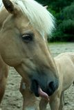 Horse head. Head of a horse. A fowl is vissible in the back Royalty Free Stock Image
