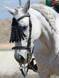 Horse head. Beautiful white horse head with ornament Stock Photo