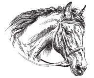 Horse head with bridle vector hand drawing illustration. Horse head with bridle in black and white vector hand drawing illustration Royalty Free Stock Images