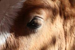 Horse. Head close Royalty Free Stock Photos