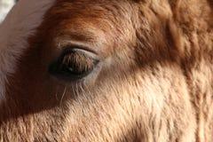 Horse. Head close Royalty Free Stock Photo
