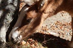 Horse. Head close Stock Photo