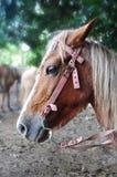 Horse head, close-up. CUte adorable horse head, close-up Royalty Free Stock Photos