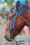 Horse head, close-up. Ute adorable horse head, close-up Stock Photos
