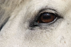 Horse head close-up Royalty Free Stock Image
