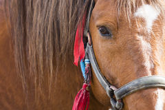 Horse head close-up Stock Photography