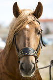 Horse head close-up Royalty Free Stock Photos