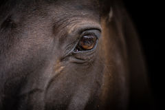 Horse head - close-up of eye. Close-up head shot of a horse in its stable, focused on its eye Stock Photography