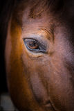 Horse head - close-up of eye. Close-up head shot of a horse in its stable, focused on its eye Royalty Free Stock Photos