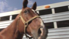 Horse Head Closeup stock footage
