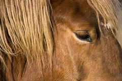 Horse head detail Royalty Free Stock Photo