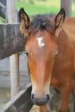 Horse head detail Stock Photo