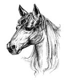 Horse head drawing. Isolated over white vector illustration