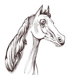 Horse head drawing Stock Image