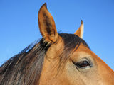 Horse head extreme closely Royalty Free Stock Photos