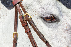 Horse Head Eye Closeup Royalty Free Stock Photography