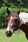 Horse head and flies Stock Photography