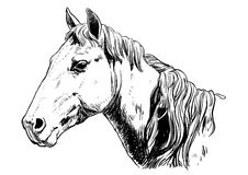 Horse head lineart Royalty Free Stock Photography