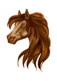 Horse head with long wavy mane. Brown horse head with long wavy mane. Gazing bay stallion. Beautiful pony portrait Stock Photos