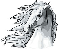 Horse head with mane flowing in the wind. Stock Image