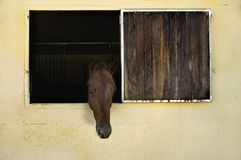 Horse with head out of window in stable Royalty Free Stock Images