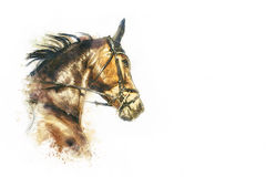 Horse head painting. On white background Royalty Free Stock Images