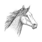 Horse head pencil sketch strokes portrait Royalty Free Stock Image