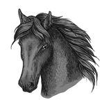 Horse head portrait with calm look Stock Photography