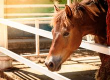 Horse head portrait. In farm royalty free stock photo